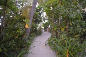 The path ot the beach from our Villa