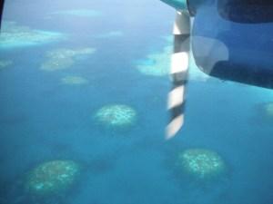 More reefs