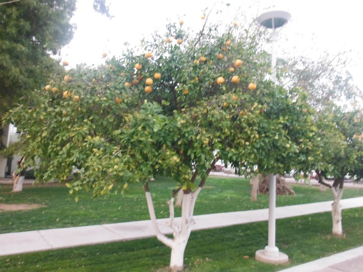 One of the many mature fruit trees on property