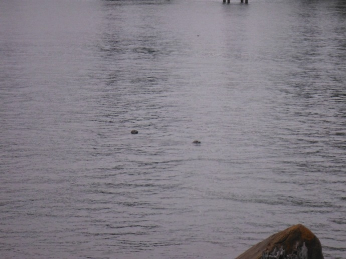 Look at those cute seals. I could see them from my front porch